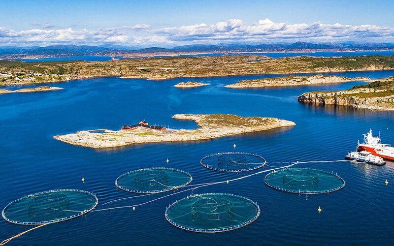 Ứng dụng IoT trong nuôi trồng thủy hải sản